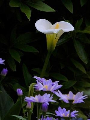 庭の花々 - 小さな感動
