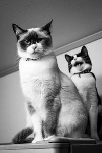 シーフ的猫写真について /  FUJINON XF 27mm F2.8 - HarQ Photography