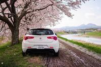 Giulietta and Cherry trees - Yesterday's*note