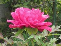 花の季節 - Zen おりおりの記