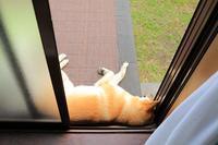 ヒトコマ写真㉟ - 結局ただの犬バカです。