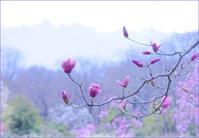 赤城自然園のモクレン - 光 塗人 の デジタル フォト グラフィック アート (DIGITAL PHOTOGRAPHIC ARTWORKS)