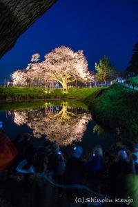 浅井の一本桜 - 撃沈 Photo Diary