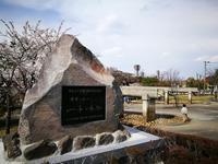 開成山公園とその付近の桜 @福島県郡山市 - 963-7837