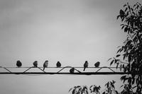 < Photo story > Roppongi monochrome ・・・2 - IL EST TROP TARD     時は過ぎゆく ...