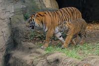 ファントムとパンプ昨日の続き - 動物園に嵌り中