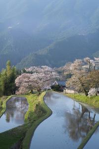 三多気の桜 #2 - Now and Here