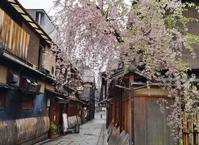 京の名残の桜を求めて(5)祇園切り通しの枝垂れ桜 - たんぶーらんの戯言