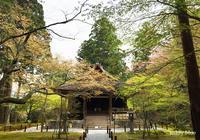 Kyoto trip  春の京都旅 洛北 - teddy blue