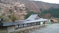 4月27日 晴天 サクラも7部咲き - おぃちゃんのデジ散歩