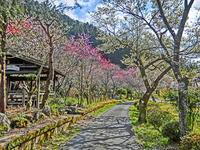 花の中仙道 JR南木曽駅~妻籠宿をハイキング - 多分駄文のオジサン旅日記