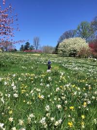 おとぎの国にいる気分になれる?春のボタニカルガーデン - ニューヨーク適度にテキトー生活