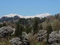 長野そぞろ歩き:通勤桜(その2) - 日本庭園的生活