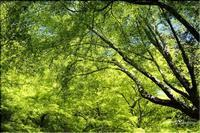 新緑 - 今日のいちまい