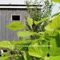 小屋に窓を作るの巻 - 暮らしをつくる、DIY*スプンク