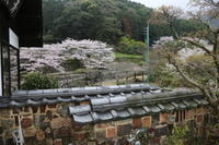 2017 桜 4月9日  大川内山の桜  - 光と影のさがしもの