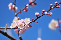 身近な場所に咲く春の花たち - このひとときを楽しもう