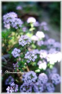 タイム - 日々楽しく ♪mon bonheur