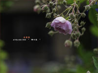 "春薔薇 Vol.01 - ATELIER 302 "" 時の色 """