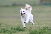 飛行犬撮影会 - 3びきが行く