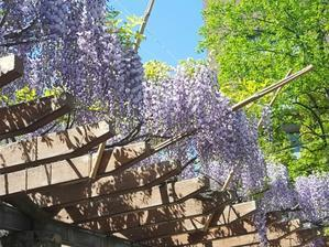 季節の花々とお・も・て・な・しの券売機 - 続☆今日が一番・・・♪