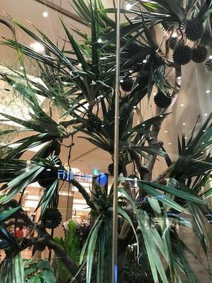 阪急百貨店ショウウインドウ - おうちやさい