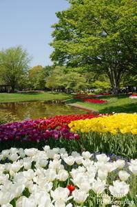 各地の花の名所を訪ねて - トラベルライター斉藤恵美の旅コラム
