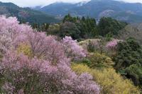 桃源郷と貝原 - katsuのヘタッピ風景