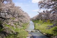 藤田川の桜 - 四十の手習い 自転車と写真が好き