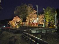千手院の夜桜! - 浦佐地域づくり協議会のブログ