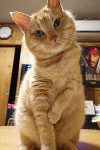 はてな? - 猫イズム
