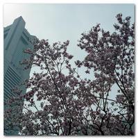 #2172 花とタワー - at the port