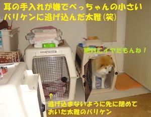 カイカイの季節・・・(涙) - もももの部屋(家族を待っている保護犬たちと我家の愛犬のブログです)