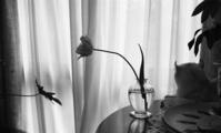 花一輪 - 黒ニャンコのひとり言