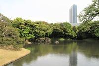 小石川後楽園の藤棚 - お散歩写真     O-edo line
