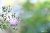 咲いてました〜♪ - 今日の小さなシアワセ