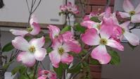 今日の撮って出し!:ご近所の花々 - デハ712のデジカメ日記2017