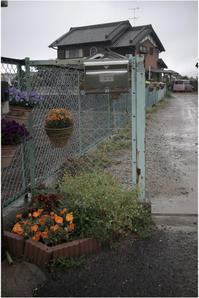 1781 雨(安静療養療養中、雨だって、プロター40㎜もったら、さあ出陣!)Part 2 - レンズ千夜一夜
