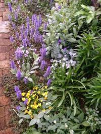 緑に覆われて - 美鈴とトラと私とお庭