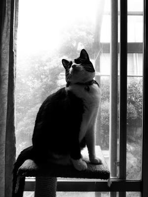 猫のいる生活  /  FUJIFILM X30 - HarQ Photography