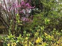 お花満開@十里木高原 - 小粋な道草ブログ