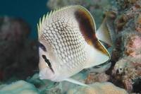 17.4.28 自分・休日、楽しみに! - 沖縄本島 島んちゅガイドの『ダイビング日誌』