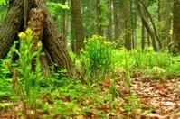 森の春(4月) - つれづれ日記