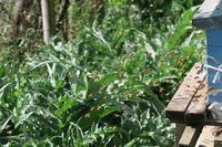 ミツバチぶんぶん、ハチミツも自家製 - ペルージャ イタリア語・日本語教師 なおこのブログ - Fotoblog da Perugia