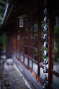 Japan - 花と風景 Photo blog