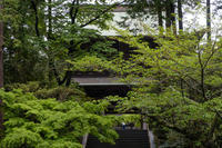 鎌倉の新緑美 - 年年歳歳写真と共に