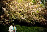 八重桜 - Io e Lei*