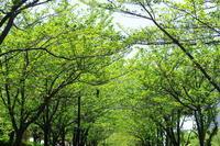 新緑の小径 - はーとらんど写真感