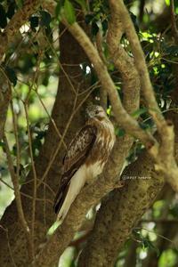 bird*55  山にて探鳥 - primary feather