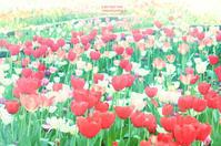 tulips & princess - IL EST TROP TARD     時は過ぎゆく ...